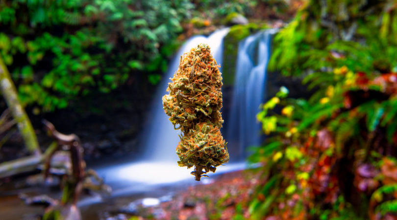 Where to Buy Weed in West Coast Canada
