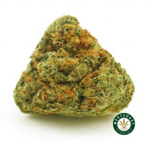 Buy Cannabis Master Kush at Wccannabis Online Shop
