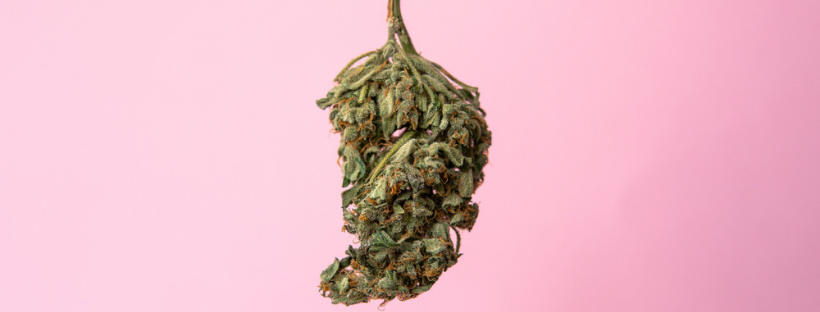 Common Kinds Of Cannabis Terpenes
