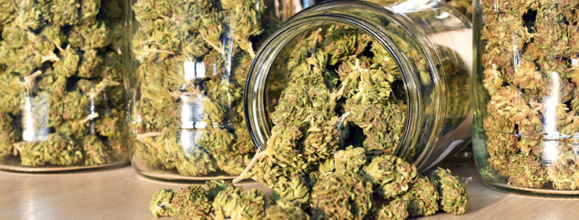 What's the Difference Between Indica and Sativa