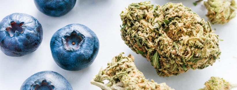 What Do Cannabis Terpenes Do