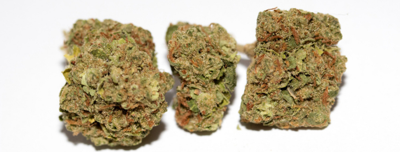 Best Indica Strains to Buy