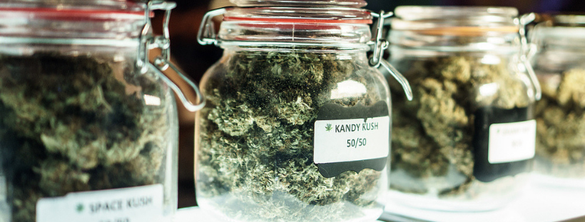 Indica vs Sativa What are the Differences