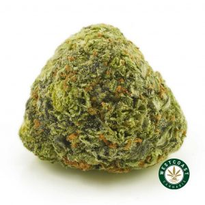 Buy Cannabis Scout Master at Wccannabis Online Shop