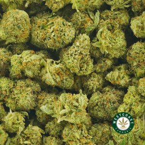 Buy Cannabis Cherry Pie at Wccannabis Online Shop