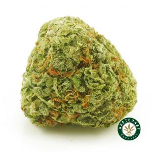 Buy Cannabis Orange Kush at Wccannabis Online Shop