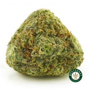 Buy Cannabis Cinderella 99 at Wccannabis Online Shop