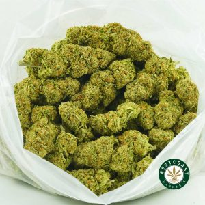 Buy Cannabis Platinum Girl Scout Cookies at Wccannabis Online Shop
