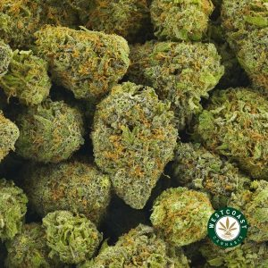 buy cannabis granddaddy purple online