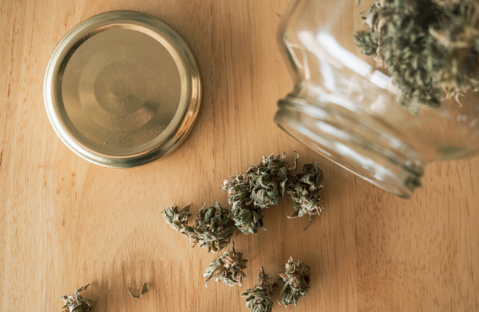 Everything You Need to Know About Cannabis Sativa