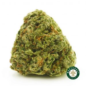 Buy Cannabis Pink Rockstar at Wccannabis Online Shop