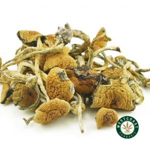 Buy Mushrooms Thai at Wccannabis Online Shop