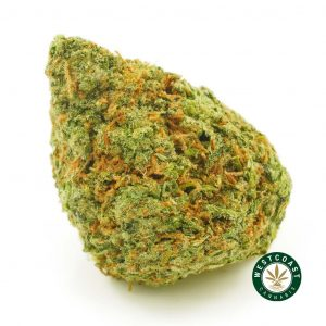 Buy Cannabis Jack Herer at Wccannabis Online Shop