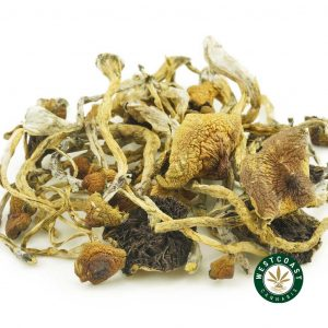 Buy Mushrooms Cambodian at Wccannabis Online Shop