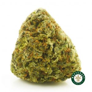 Buy Cannabis Purple Urkle at Wccannabis Online Shop
