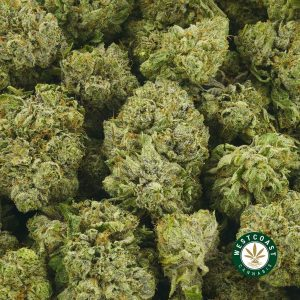 Buy Cannabis Gorilla Bomb at Wccannabis Online Shop