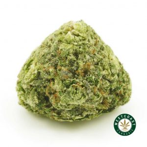 Buy Cannabis Blue Rhino at Wccannabis Online Shop