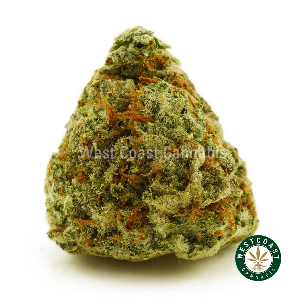 Buy Cannabis Island Sweet Skunk at Wccannabis Online Shop