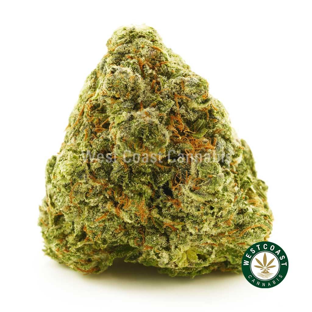 Buy Cannabis Bruce Banner at Wccannabis Online Shop