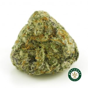Buy Cannabis Miracle Alien Cookie at Wccannais Online Shop
