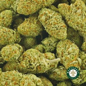 Buy Cannabis Girl Scout Cookie at Wccannabis Online Shop