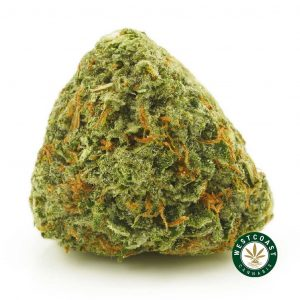 Buy Cannabis Four Star General at Wccannabis Online Shop