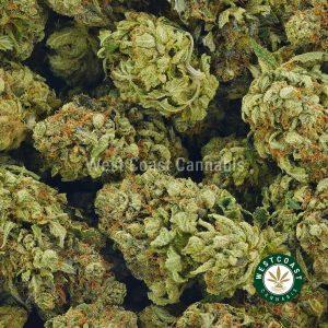Buy Cannabis Master Jedi at Wccannabis Online Shop