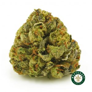 buy cannabis bubba fish online