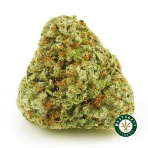 buy cannabis cookies and cream online