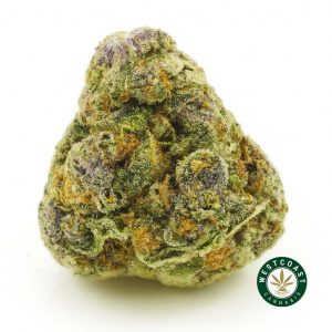buy cannabis purple pug breath online