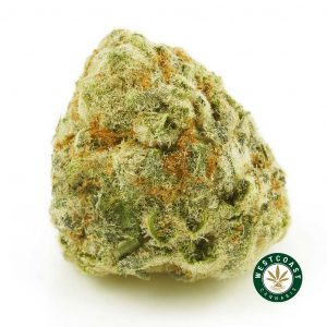 buy cannabis silver surfer online
