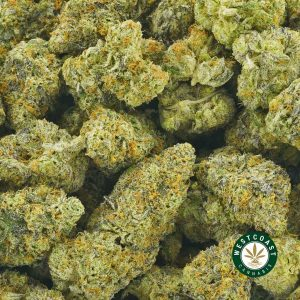BUY CANNABIS PEYOTE COOKIES ONLINE