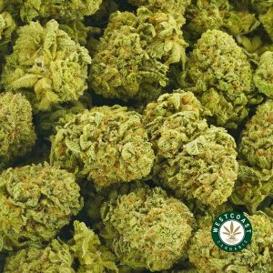 Buy Cannabis Key Lime Pie at Wccannabis Online Shop