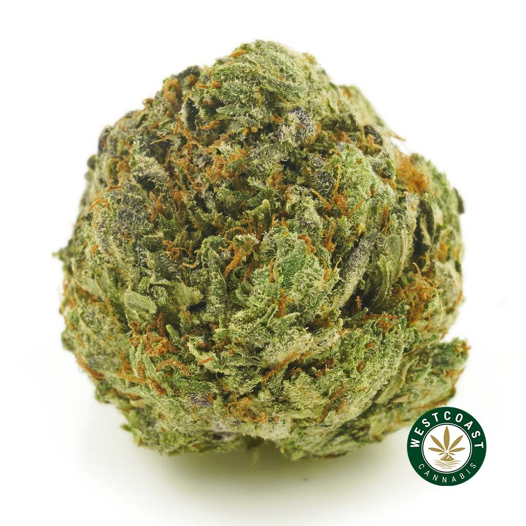 West Coast Cannabis Cyber Monday Sale One Day Only
