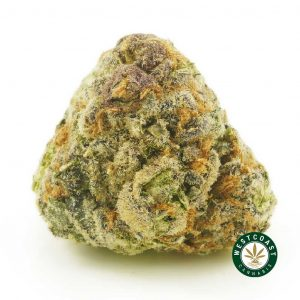 buy cannabis black cherry online