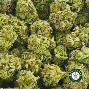 Buy Cannabis Bruce Banner at Wccannabis Online Shop
