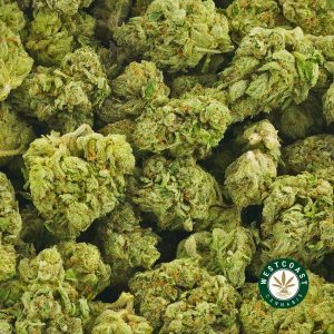 Buy Cannabis Atomic Pink at Wccannabis Online Shop