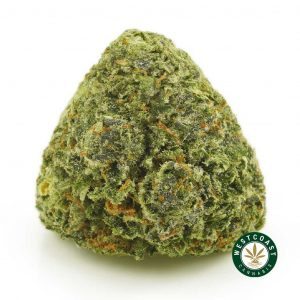 Buy Cannabis Gelato at Wccannabis Online Shop