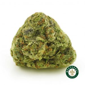 Buy Cannabis Pink Kush at Wccannabis Online Shop