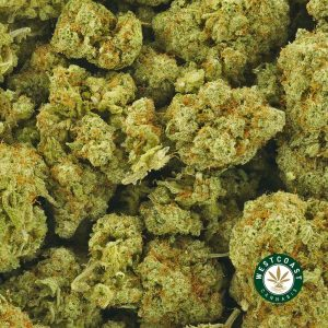 Buy Cannabis Jungle Cake at Wccannabis Online Shop