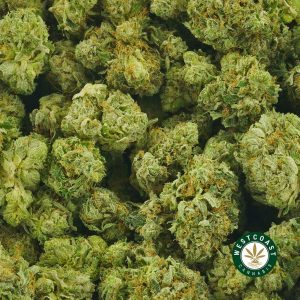 Buy Cannabis Purple Punch at Wccannabis Online Shop