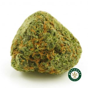 Buy Cannabis Nirvana at Wccannabis Online Shop
