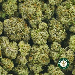 Buy Cannabis Blueberry Bomb at Wccannabis Online Shop