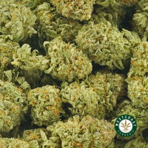 Buy Cannabis Watermelon Kush at Wccannabis Online Shop