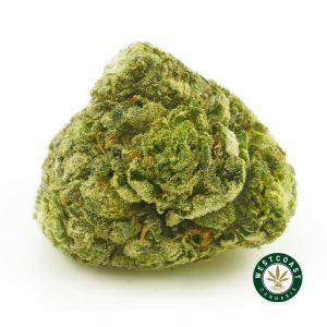 Buy Cannabis Blue Magoo Cookies Online at Wccannabis Online Shop