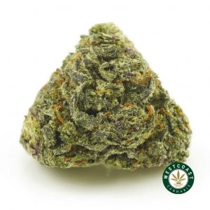 Buy Cannabis White Berry at Wccannabis Online Shop