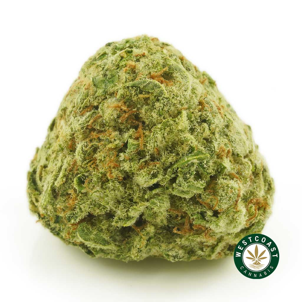 Buy Cannabis Girl Scout Cookies at Wccannabis Online Shop