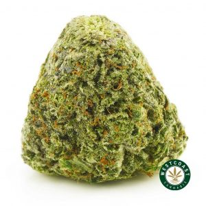 Buy Cannabis Gorilla Glue 4 at Wccannabis Online Shop