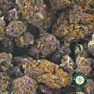 Buy Cannabis Huckleberry at Wccannabis Online Shop