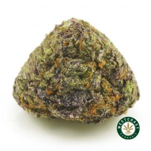 Buy Cannabis Purple Gasoline at Wccannabis Online Shop